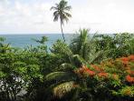 Tobago View