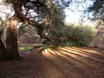 Running trails through Travis Heights, surrounded by beautiful live oaks