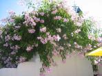 Gardens at casa limao