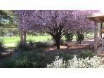 B - Seasonal Plum Tree Blossoms