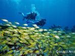Ocean Diving in Akumal