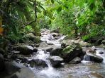 Jungle Stream near Villa Mariposa
