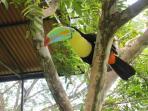 Tucan at Monkey Park