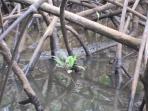 Crocodile sighting on Tamarindo Estuary tour