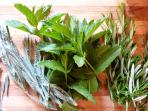 Fresh herbs picked from the garden