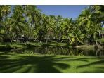Coco Palms 100
