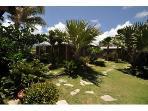 area of our garden behind Papaya