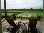 Ricefield deck with views on sunsetside