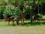 Garden with the deer