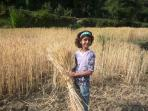 Kids enjoying plucking wheat from the farm