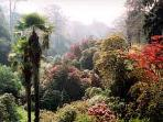 Trebah Gardens, one of the many exotic gardens near Falmouth (Autumn)