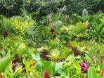 The garden is filled with exotic tropical plants, trees & flowers.