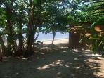 A short Walk to the beach and the Dock, La Diosa, Roatan Honduras