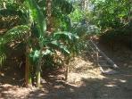 Path to the Beach - La Diosa, Roatan Honduras