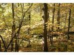 Coop-woods