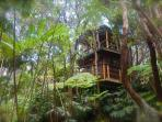 treehouse in forest of hapu'u and ohia