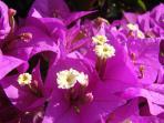 surrounding flowers