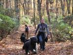 Bring the dogs along on a hike and wear them out!