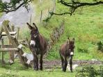 The area is renowned for Irish Donkeys
