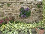 Garden wall April