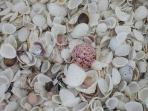 So Many Shells on the Beach