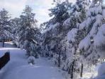 Winter Scene Flagstaff Vacation Rental
