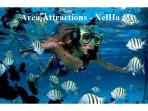 Area Attractions - XelHa