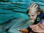 Area Attractions Puerto Aventuras - swim with dolphins 2