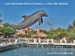 Area Attractions Puerto Aventuras - swim with dolphins 3