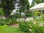 front garden summer blooms