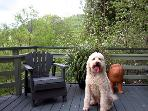 Park Place, Dog Friendly Vacation Rental, Russian River CA