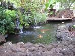 Koi Pond on Prince Kuhio grounds