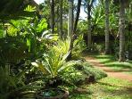 Beautiful TropicalGardens and grounds on Prince Kuhio site
