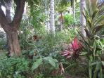 Tropical Gardens -Prince Kuhio site