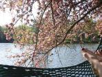 Relax in a lakeside hammock, your new happy place!
