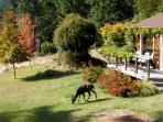 Cottage deck and deer