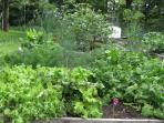 Greens galore flourish in compost-amended vegetable garden.