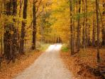 Enjoy the enchantment of a walk in the woods in the fall.