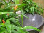Rock bath in the spa at Villa Sabandari, boutique resort in the rice paddies near Ubud Bali