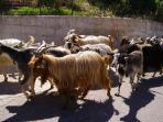 Traffic jam, Abruzzan style!