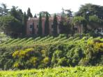 Surrounded by vineyards, 45 minutes from Rome Center