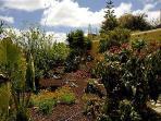La Bodega garden, lower area.