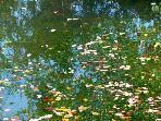 La Menagerie Pond