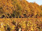 Vineyards and Woods-Harvest Season
