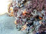 Sea Stars and Tidepools, Bandon Beach