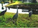 Our daily visitors The Crane Family