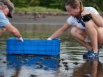 Release newborn turtles at the Hermosa Refuge close to the house