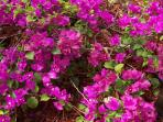 Beautiful Flowers Surround You