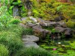 Listen to the waterfall gently cascading down natural rock stream into pond