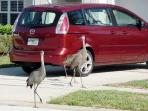 Glenbrook\'s local residents